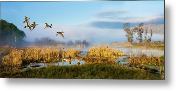 The Wetlands Metal Print