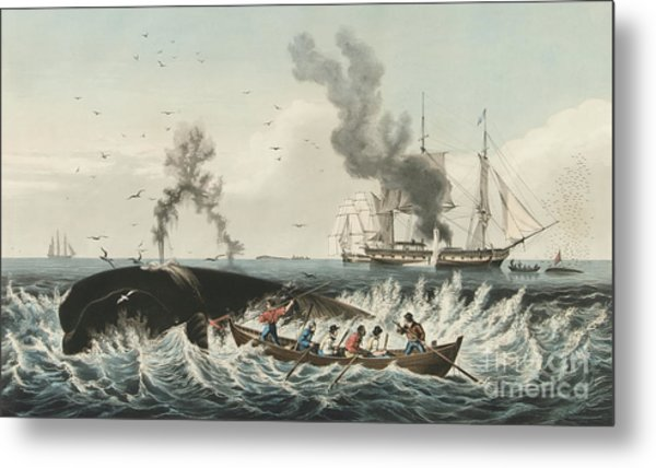 The Whale Fishery Attacking A Sperm Whale And Cutting In Metal Print