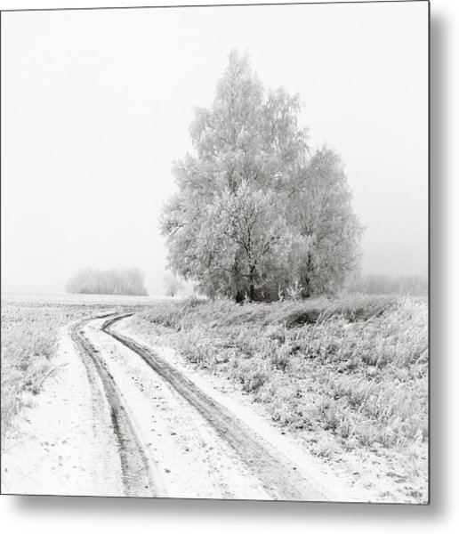 The White Silence. Horytsya, 2014. Metal Print