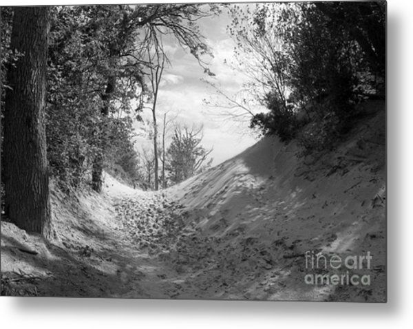 The Windy Path Metal Print