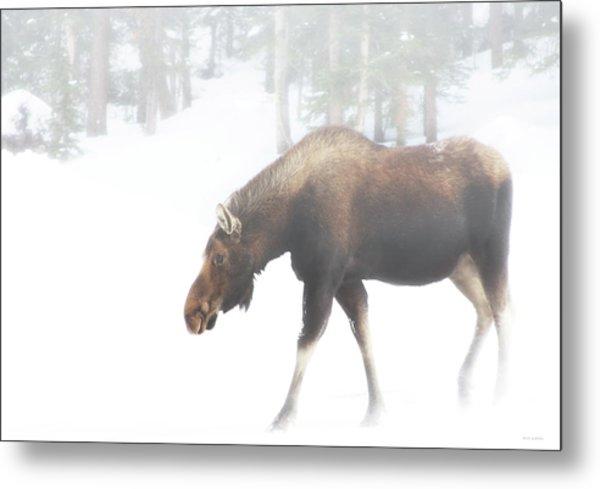 The Winter Moose Metal Print