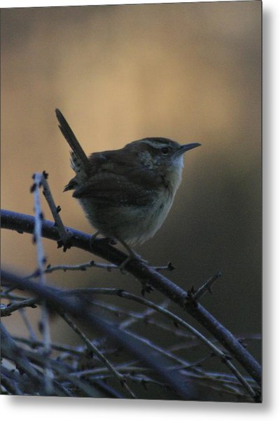 The Wren Metal Print