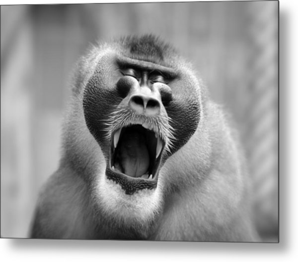 The Yawn I Metal Print by Antje Wenner
