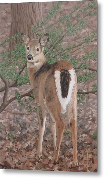 The Yearling Metal Print