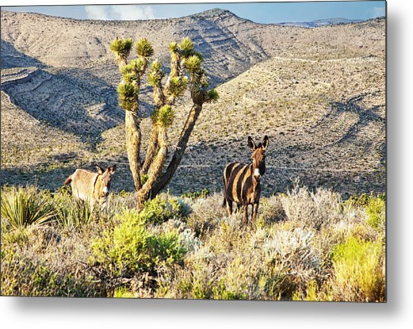 The Zebra Burro Metal Print