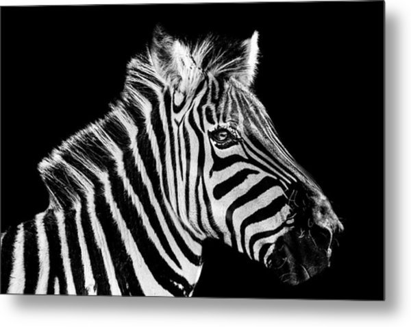 The Zebra Stripes Metal Print