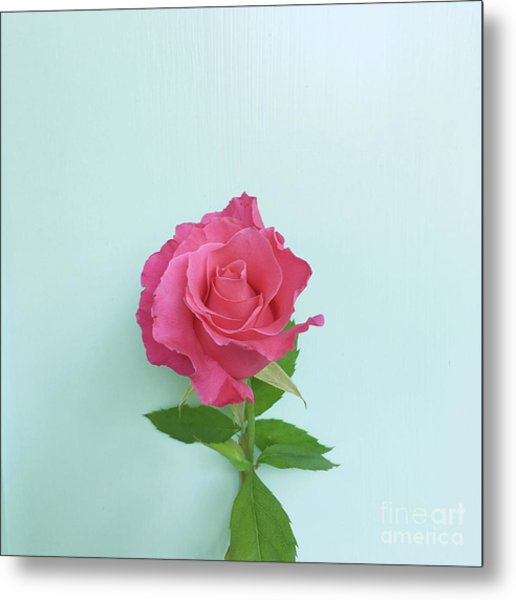 Metal Print featuring the photograph There Is Simply The Rose by Cindy Garber Iverson