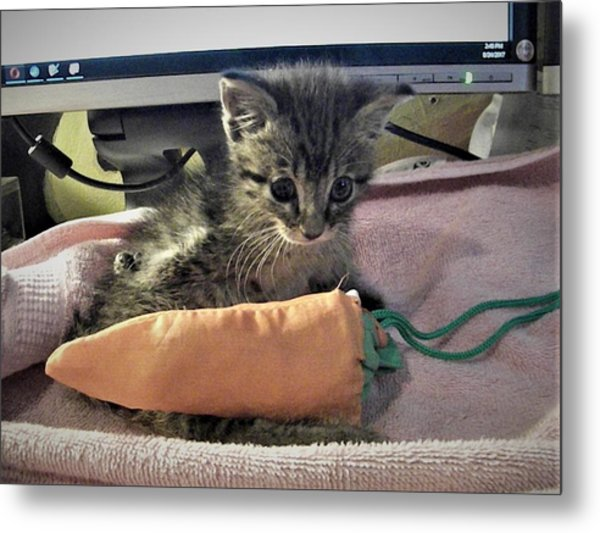 There's A Cat On My Desk Metal Print