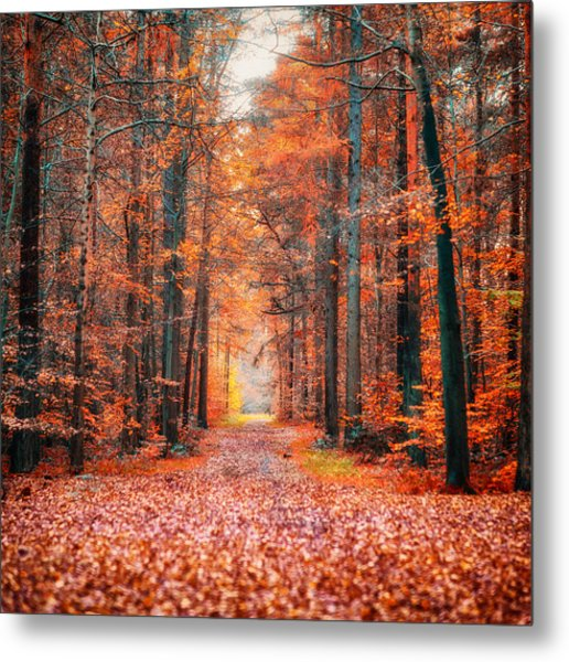 Thetford Forest Metal Print