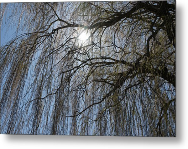 Thick And Thin -  Metal Print
