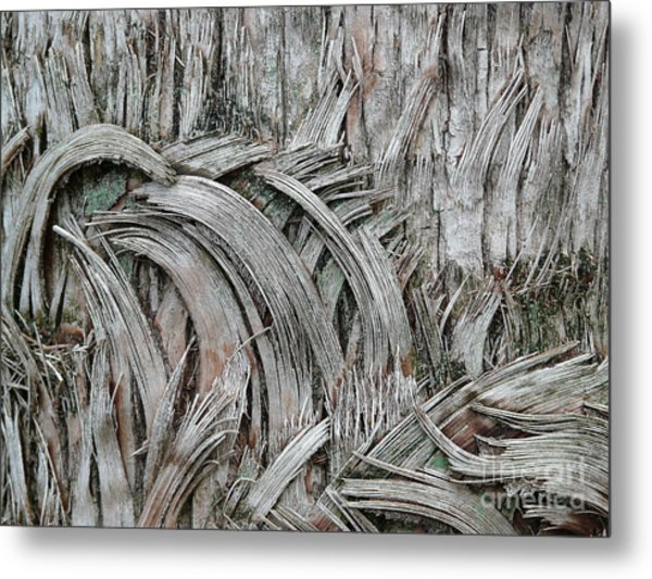 This Way 'n That Metal Print by Donna McLarty