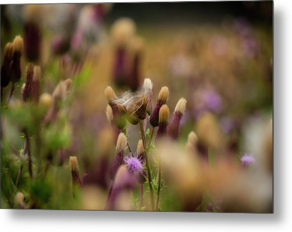 Metal Print featuring the photograph Thistle Babies by Jeremy Lavender Photography