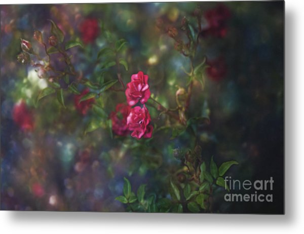 Thorns And Roses II Metal Print