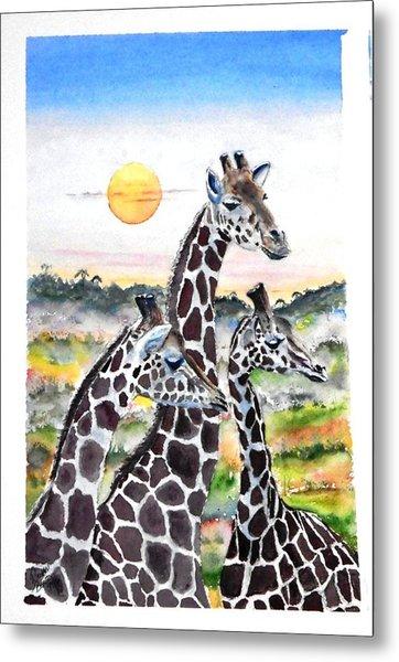 Three Giraffes    Sold Metal Print