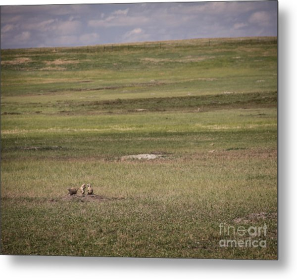Three Amigos Metal Print by Sandy Adams