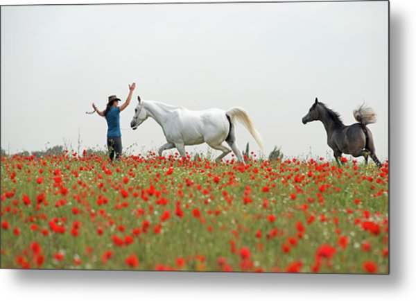 Three At The Poppies' Field Metal Print