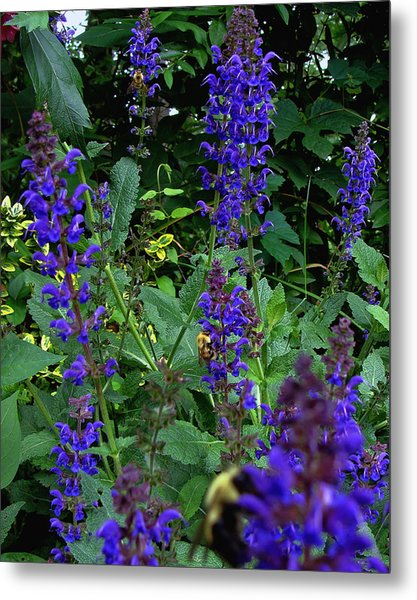 Three Bumble Bees And Dephiniums Metal Print by Martin Morehead