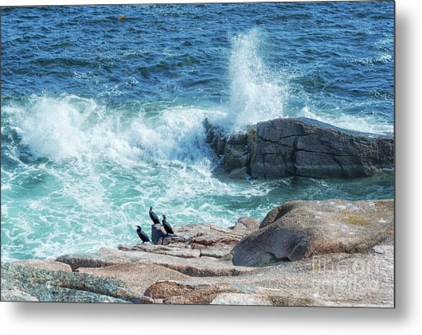 Three Cormorants At Monument Cove, Acadia National Park Metal Print