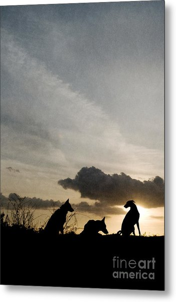 Three Dogs At Sunset Metal Print