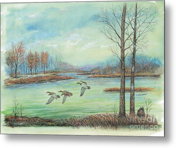 Three Ducks On A Blue Day Metal Print by Samuel Showman