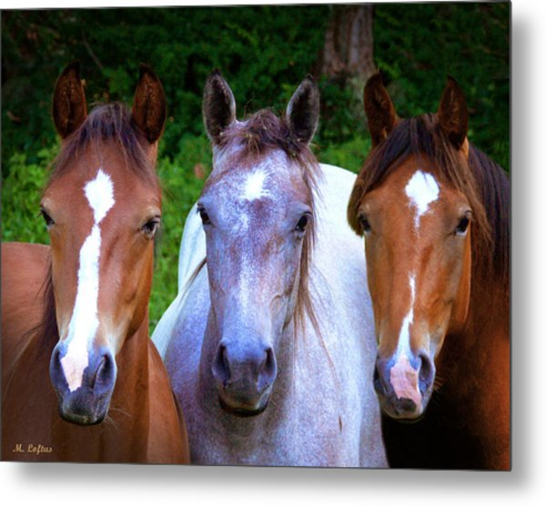 Three Friends Metal Print