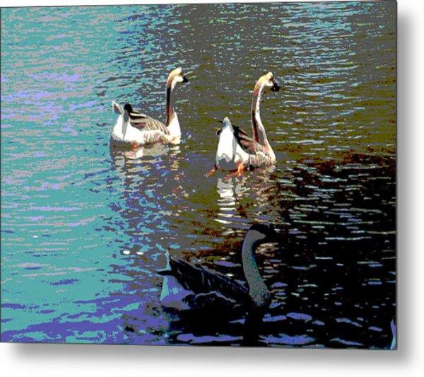 Three Geese Swimming Metal Print by Diann Baggett