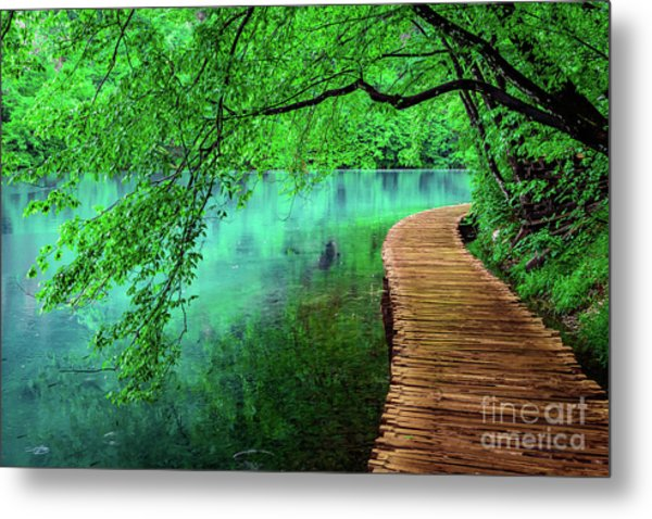 Tree Hanging Over Turquoise Lakes, Plitvice Lakes National Park, Croatia Metal Print
