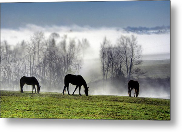 Three Horse Morning Metal Print