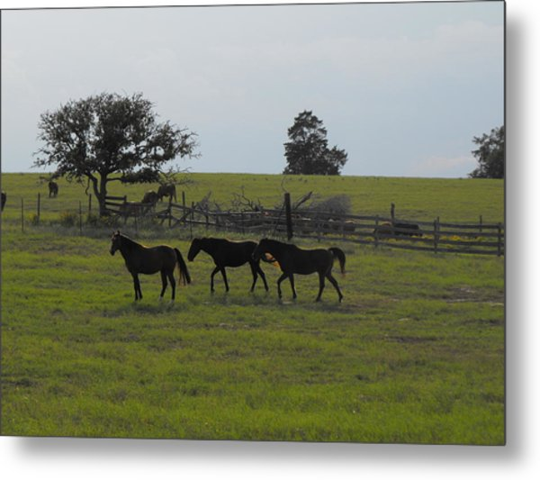 Three Horses Metal Print by Rebecca Cearley