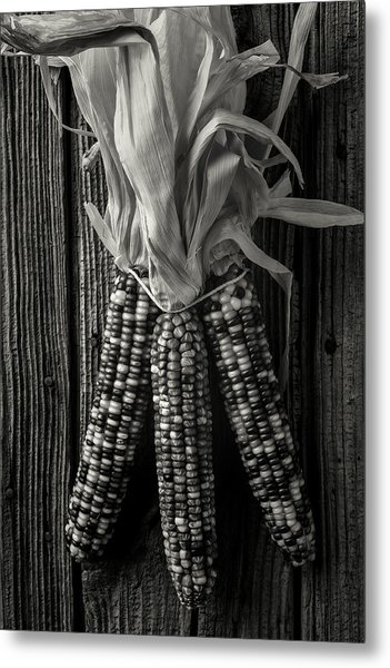 Three Indian Corn In Black And White Metal Print