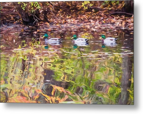 Three Mallards. Metal Print
