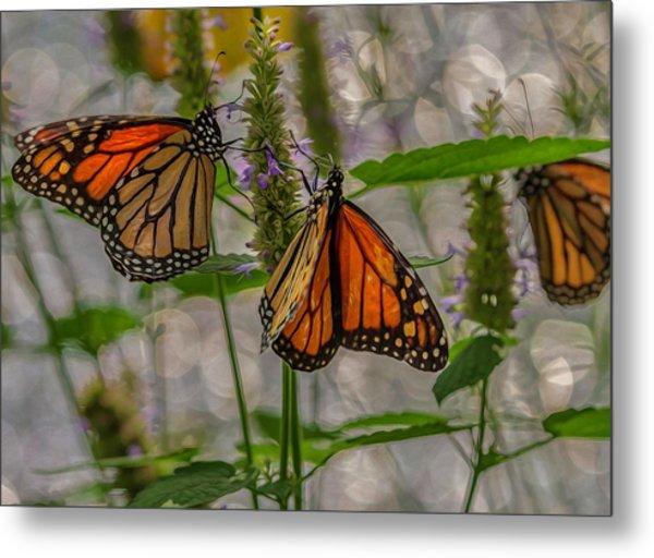 Three Monarch Butterfly Metal Print