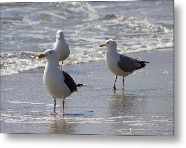 Three Of A Kind - Seagulls Metal Print