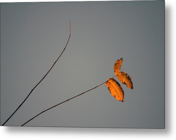 Three Oranges Metal Print by Ross Powell