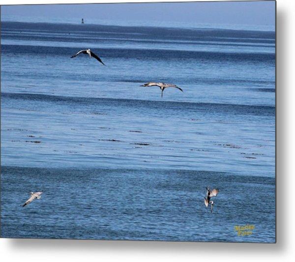 Three Pelicans Diving Metal Print