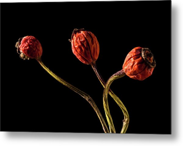 Three Rose Hips Metal Print