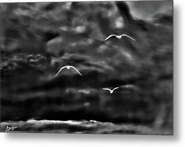 Three Seagulls Metal Print
