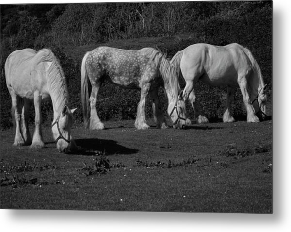 Three Shires Metal Print