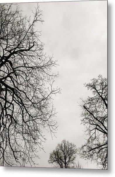 Three Trees Metal Print