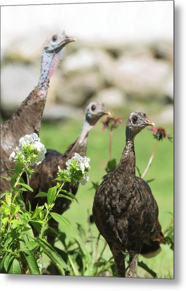 Threes A Crowd Metal Print
