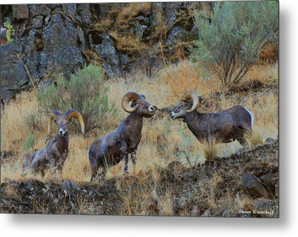 Three's Company Metal Print