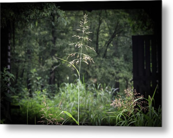 Through The Barn Metal Print