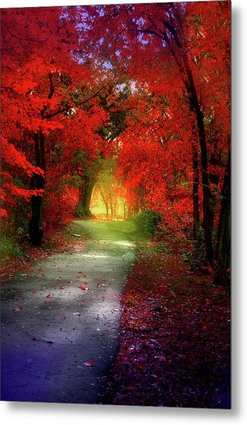 Through The Crimson Leaves To A Golden Beginning Metal Print