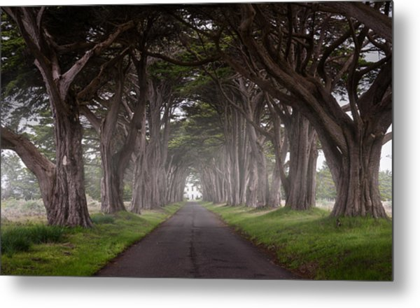 Through The Cypress Metal Print