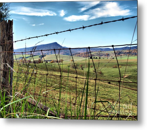 Through The Fence Metal Print by Kathy Jennings