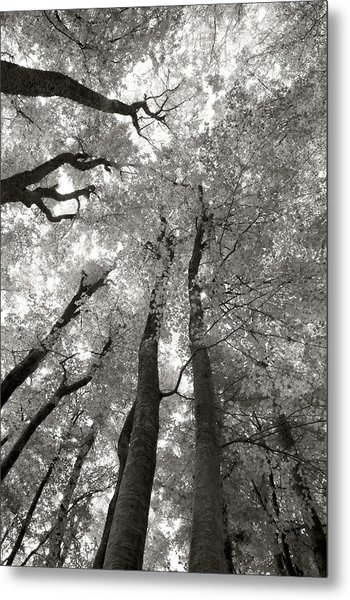 Through The Forest 2 Metal Print by Marjan Jankovic