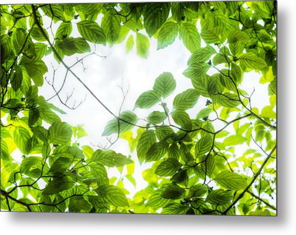 Metal Print featuring the photograph Through The Leaves by David Coblitz