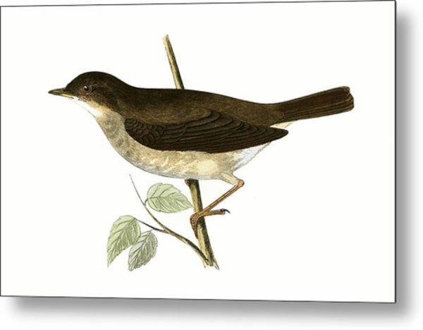 Thrush Nightingale Metal Print