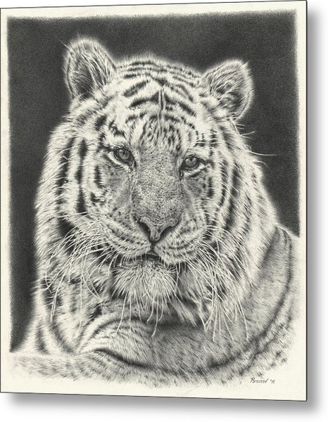 Tiger Drawing Metal Print