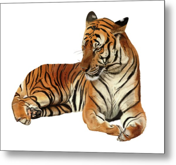 Tiger In Repose Metal Print